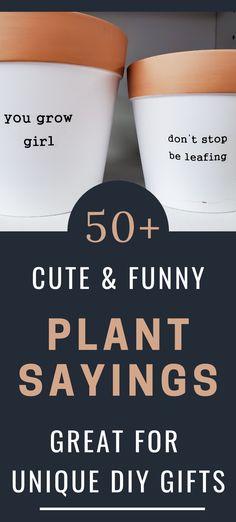 Small Plants, Potted Plants, Gift Quotes, Funny Quotes, Succulent Puns, Painted Plant Pots, Pot Plante, Clay Pot Crafts, Plants Quotes