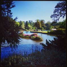 Royal Botanic Gardens - Melbourne #royalbotanicgardensmelbourne #beautifulgardens #australia