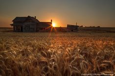 Photo It's harvest time!! by Salim waguila on 500px