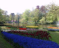 Photographed in: Keukenhof flower garden, Netherlands