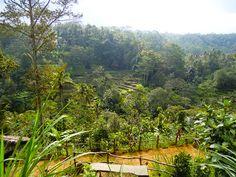 9/13(火)バリ島ウブドのお天気は曇り。室内温度27.5℃、湿度74%。夜から朝にかけて久しぶりの雨が降りました。雨後の植物は生き生きとして、こっちまで元気になる~!