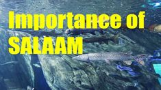Importance of Giving Salaam, Oh and FISH! come to goodness, abdul karim Sharks, Islam, Creatures, Fish, Poster, Shark, Muslim, Movie Posters, Ichthys