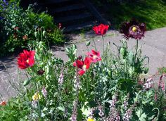 Some of the poppies seem to have reseeded, can't wait to see which ones come up.