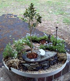 Japanese boxwood, blue star creeper, flagstone patio, lamp & bench, planted in an inverted propane tank lid.