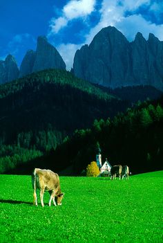 Alpine scene in the Dolomites, St. St Magdalena, Northern Italy, The Good Place, Places To Go, Scene, Europe, The Incredibles, Mountains, Gallery