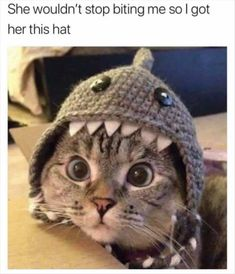 Cats and kittens are the funniest animals on Earth. Just look how all these cats & kittens play, fail, get along with dogs, make funny sounds, Funny Animal Memes, Cute Funny Animals, Cute Baby Animals, Funny Cute, Cute Cats, Funny Humor, Super Funny, Cute Cat Memes, Animal Humor