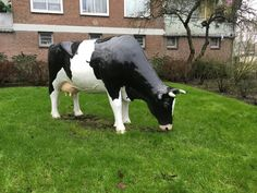 Art cow in Amsterdam