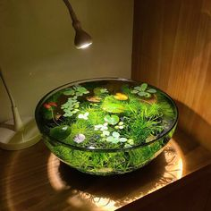 "James Wong on Twitter: ""I ❤️ ponds, but live in a tiny London flat. So I made a 'nano pond' using just an @ikeauk lamp & fruit bowl. Complete with mini waterlily. https://t.co/tTIhVuz2gQ"""