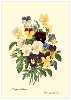 Gloxinia Persevering Van Houtte 1845 Flore Des Serres Lithograph For Improving Blood Circulation
