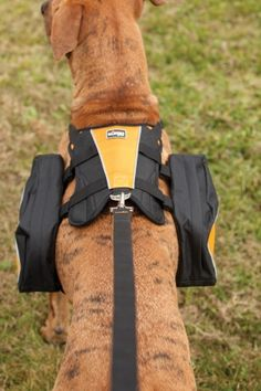 Fantastic dog pack with removable saddle bags and two 1L ...