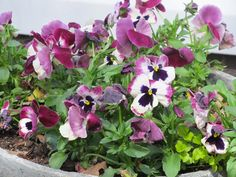 pansies always make me smile!