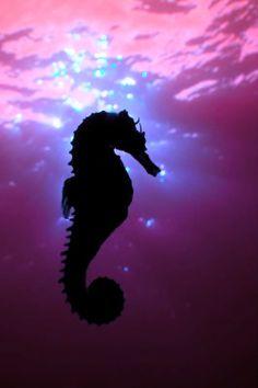 Purple | Porpora | Pourpre | Morado | Lilla | 紫 | Roxo | Colour | Texture | Pattern | Style | Form | sea horse