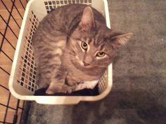 Jasper... Adopted!