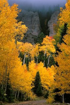 Autumn photograph of aspen lining High Mesa Road near Cimarron, Colorado. Exquisite outdoor landscape photographs by photographer Andy Cook available for purchase and stock use. Beautiful World, Beautiful Places, Beautiful Pictures, Beautiful Scenery, Fotografia Macro, Aspen Colorado, Colorado Mountains, Colorado Springs, Autumn Scenes