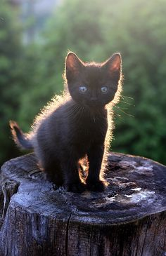 little black kitten on a stump =ö= by Szilvia Pap-Kutasi Cute Kittens, Kittens And Puppies, Cats And Kittens, Pretty Cats, Beautiful Cats, Baby Animals, Cute Animals, Owning A Cat, I Love Cats