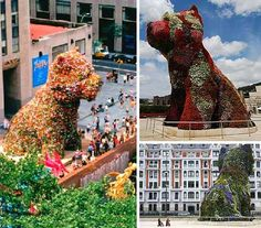 "The Guggenheim Museum Bilbao, in Bilbao, Spain, has a 43 feet tall West Highland White Terrier guarding the entrance. Jeff Koons' monumental topiary ""Puppy"" has an internal irrigation system used to keep its flowery fur as fresh as daisies.      - photos by  Bethany J Mitchell, TravelPod/Btran, and Purple Cloud"