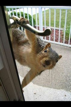 30 Squirrels Memes And Photos That Will Drive You Nuts - World's largest collection of cat memes and other animals Squirrel Memes, Cute Squirrel, Baby Squirrel, Cat Memes, Squirrels, Funny Memes, Jokes, Cute Baby Animals, Chipmunks