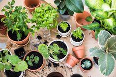 Prinášame vám zoznam najlepších rastlín na čistenie vzduchu a odstránenie stresu z vašej domácnosti.