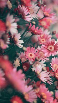 Wiesenblumen – Best Garden Plants And Planting Flor Iphone Wallpaper, Wallpaper Flower, Flower Backgrounds, Nature Wallpaper, Flowers Nature, Exotic Flowers, Pretty Flowers, Wild Flowers, Bouquet Flowers