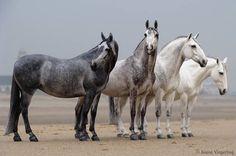 """""""All kinds of Grey"""" : sculptés par Brigitte Eberl, peints par Josine Vingerling. Bluffants !"""