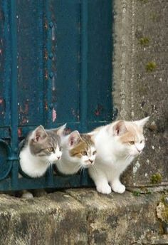3 Kitties keeping an eye out...