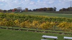 19 Best Wine In Amish Country Images Amish Country Winery Wine