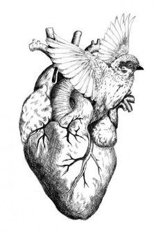 Arte Com Grey's Anatomy, Anatomy Art, Heart Tattoo Designs, Bird Silhouette, Anatomical Heart, Vintage Drawing, Human Heart, Heart Art, Texture Art