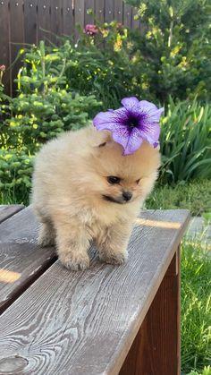 Beautiful Dog Breeds, Beautiful Dogs, Cute Baby Animals, Animals And Pets, Funny Animals, Cute Dogs, Cute Babies, Cute Puppies, Dogs And Puppies