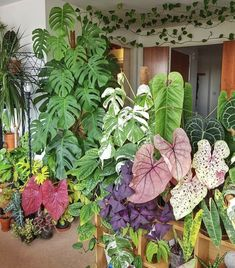 Loving all the plant gang helloplantlady is the new helloplantlover Image by a_londoners_urban_jungle Indoor Garden, Garden Plants, Indoor Plants, Room With Plants, House Plants Decor, Exotic Plants, Tropical Plants, Plant Design, Garden Design