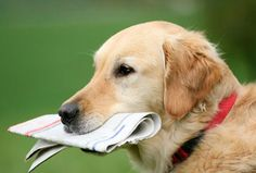 I will post your 5 articles on Pets niche with 2 links each on my blog for $5