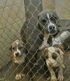 Clayton County NC. Need foster and pledges.    https://www.facebook.com/pages/Partners-with-Clayton-County-Animal-Control/339511346067908?id=339511346067908sk=photos_stream
