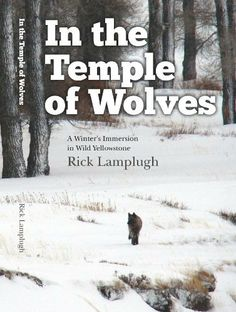 In the Temple of Wolves:  A Winter's Immersion in Wild Yellowstone by Rick Lamplugh, http://www.amazon.com/dp/B00HJXNLJI/ref=cm_sw_r_pi_dp_hlBotb1EMWB6P
