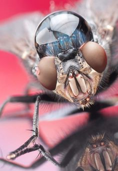 Amazing Macro Photos of Bugs With An Unsual Accessory