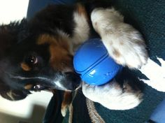 """""""A new toy! Thanks Dad!!"""