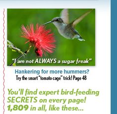 Humming Birds/Pintrest - Saferbrowser Yahoo Image Search Results