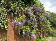 Wisteria can be planted as a tree or vine. In the vine form, its twining stems allow it to climb and creep. Boasts fragrant, draping flowers in the spring. Perfect Plants, Cool Plants, Landscaping With Rocks, Landscaping Plants, Rock Wall Landscape, Moss Phlox, Rock Waterfall, Arch Flowers, Landscape Materials