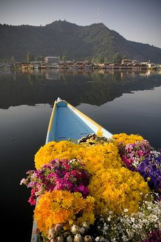 Bouquet Of Flowers In Bow Of Boat Dal