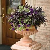 You don't have to fill your whole porch with flowers to create a welcoming space. A simple classic urn featuring a monochromatic combination such as this can be all you need. We call this combination & Elegant& rich dark and purple tones add a Container Flowers, Flower Planters, Container Plants, Container Gardening, Flower Pots, Plant Containers, Outdoor Planters, Garden Planters, Potted Garden