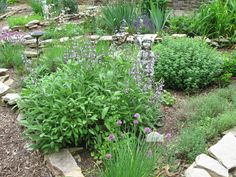 My herb garden occupies one of the triangle beds in the perennial garden. I have a wide assortment of herbs there. Herb Garden, Perennials, Stepping Stones, Bloom, Herbs, Outdoor Decor, Plants, Outdoors, Stair Risers