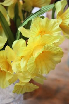Daffodils look pretty.Please check out my website thanks. www.photopix.co.nz