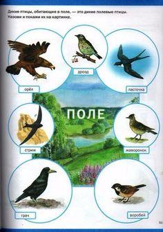 Montessori Kindergarten, Reggio Emilia, Homeschool, Birds, Education, Fleas, Language, Studying, Montessori Preschool