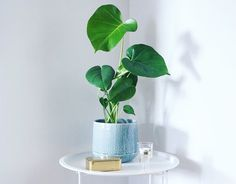 Monstera, table, brickbord, interior. Monstera, More Pictures, Places, Instagram, Lugares
