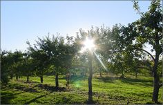 """Thompson's Orchard - they have a """"gazebo"""" available for weddings, but no photos on the site"""