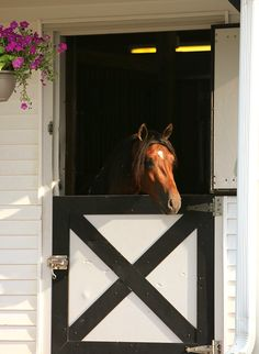 my barn has this dutch door style in green and white Dream Stables, Dream Barn, Horse Stalls, Horse Barns, Farms Living, Horse Love, Equestrian Style, Farm Life, Farm Animals