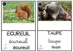 """Album """"Petite taupe.....porte"""""""