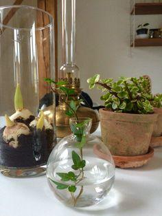 Våren kan komma! #lerkruka #svenskttenn #vieuxtrucs #tulpan #tulip #pot #plant
