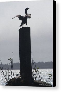 I Am Cormorant Canvas Print by Tom Janca.  All canvas prints are professionally printed, assembled, and shipped within 3 - 4 business days and delivered ready-to-hang on your wall. Choose from multiple print sizes, border colors, and canvas materials.