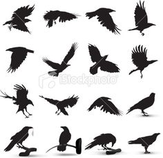 Raven Silhouette Tattoos for Women