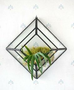 Mount this clear glass wall sconce anywhere with a small nail, or suction cup for a window. Perfect for displaying air plants.