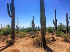 Saguaro National Park | Tucson | Arizona | Photo via Instagram by @jwo.adventures | Things To Do | Hiking | Outdoor Adventure